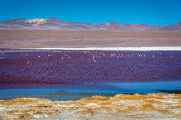 Flamingos on Laguna Colorada, colorful salt lake in Sur Lipez province, Potosi, Bolivia