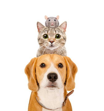 Funny portrait of pets isolated on white background