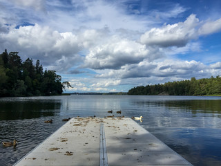 Beautiful scenic summer landscape view of water cloudy sky and forest with mallard birds at a jetty.