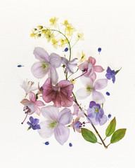 Beautiful botanical still life compositions highlighting the fragile colourful beautiful nature of flowers.