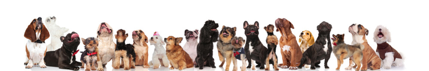 many adorable dogs of different breeds looking up