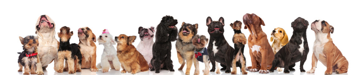 adorable group of many curious dogs of different breeds