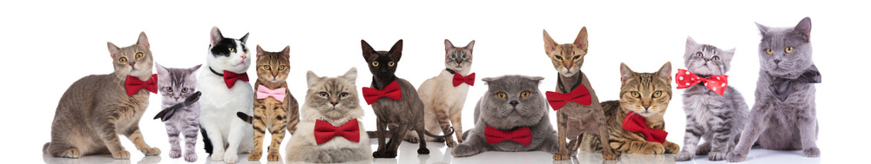 many adorable cats wearing elegant bowties on white background