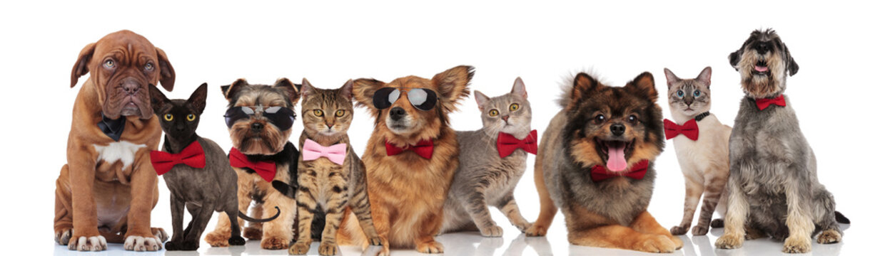 cute group of elegant cats and dogs with bowties