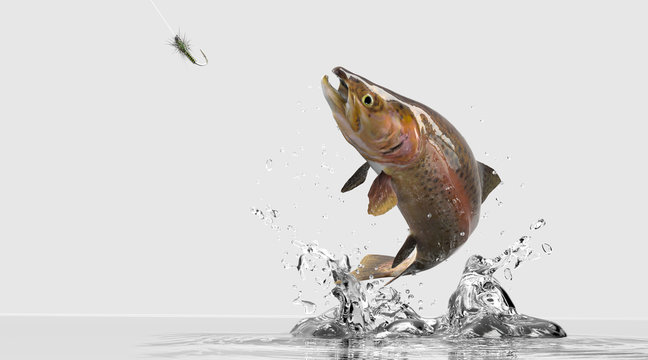 Freshwater trout bass image for sport fishing tournament