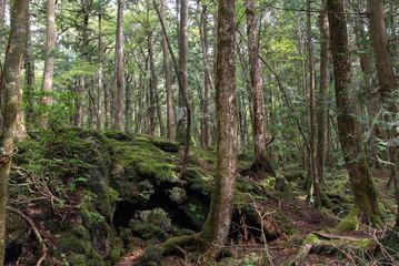 "The vast field called ""Aokigahara Jyukai"" at the foot of Mt. Fuji"