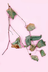 pink leaves top view card copy space green autumn background Valentine day dry branch