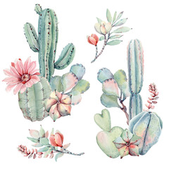 Watercolor succulents set in vintage style.