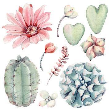 Watercolor vintage succulents set