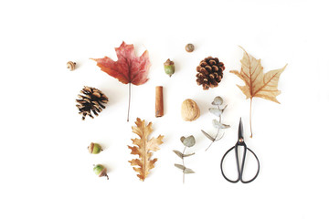Autumn botanical floral composition. Maple, oak and dry eucalyptus leaves pattern with pine cones, nuts and black vintage siccors on white table background. Styled stock photo. Flat lay, top view.