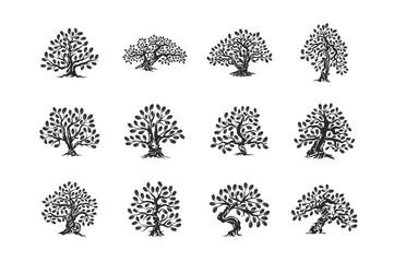 Huge and sacred oak tree plant silhouette logo isolated on white background set.