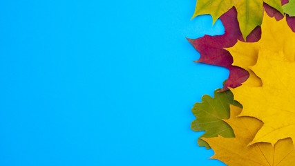 Colorful yellow green red leaves in autumn at blue background Wall mural