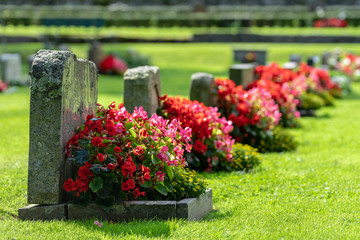 Row of grave stones with red and pink flowers Fototapete