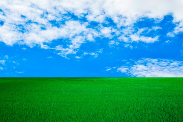 white cloud on blue sky and green field background Nature Landscape.in thailand summer.parks/outdoor.