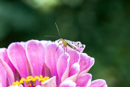 zanzara su  fiore