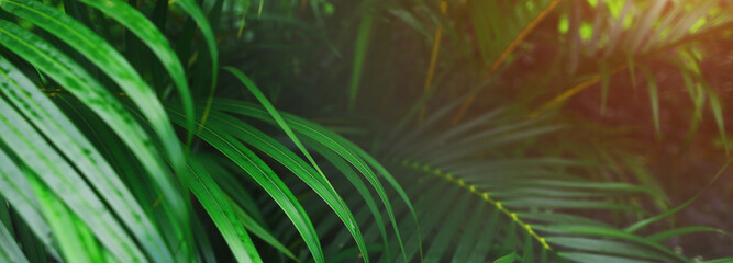 Website header and banner of tropical palm leaves and sunshine. Concept of blog heading, tropical theme, summer blog header. flora and plants.