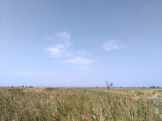 Landscape of the island Dzharylgach