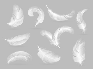 Realistic feathers. White bird falling feather isolated on white background vector collection. Illustration of feather bird, soft white plume
