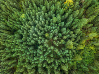 arial veiw of green forest. drone shot