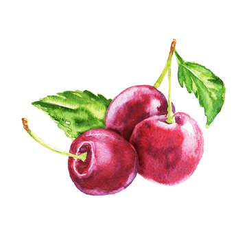 Hand drawn watercolor cherry bunch, food composition with green leaves isolated on white background. Delicious realistic illustration.