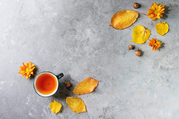 Cup of hot tea decorated by yellow autumn leaves, aster flowers and acorns over grey texture background. Flat lay, space. Seasonal background.