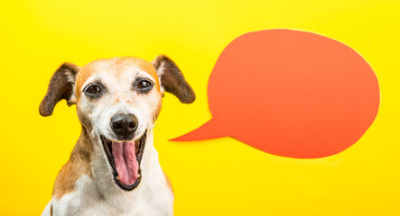 Laughing dog with open mouth. Happy smiling pet on yellow background and orange speech balloon. Funny silly dog Jack Russell terrier