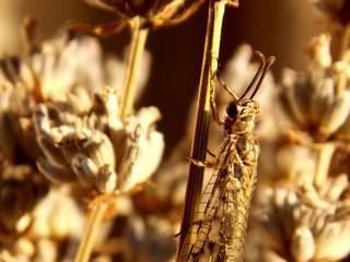 beetle on dry plant