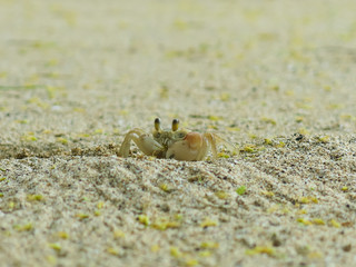Snacktime for Crabby Claws