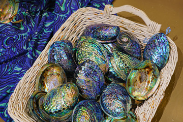 A basket of blue and green mother-of-pearl abalone paua shell in New Zealand