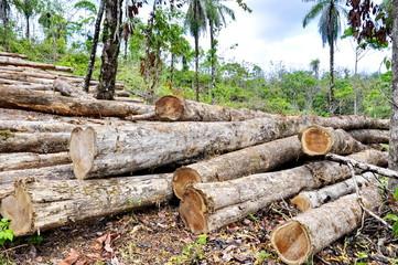 Logging in Costa Rica