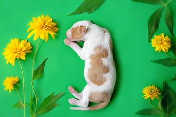 Спящие маленькие щенки поденко ибиценко