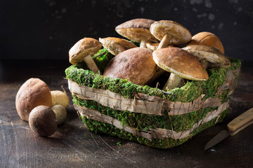 Forest mushrooms in basket with moss, autumn harvest, boletus, white and aspen. Raw fresh mushrooms on dark background