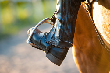 a foot in the stapes of a horse