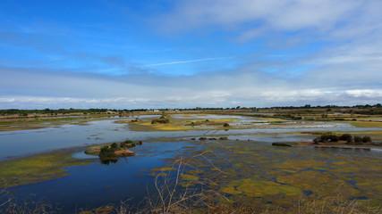 Ile de Ré: Salzwiesen, Marais, Naturschutzgebiet Lilleau des Niges