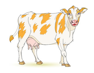 Fantasy illustration of cute standing cow on white background. Hand-drawn vector image.