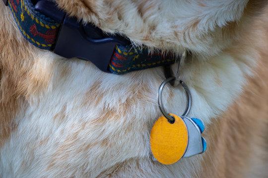 dog collar with blank ID tags