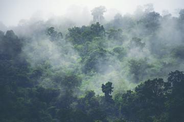 Naklejka premium widok przyrody lasu tropikalnego, obraz vintage