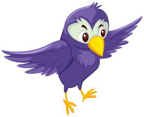 A purple bird on white background