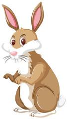 A rabbit on white background