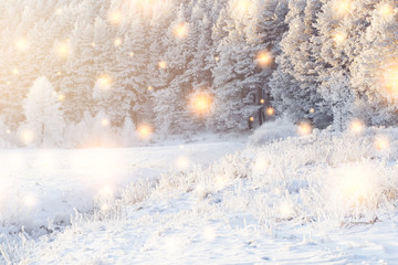 Shining magic snowflakes fall on snowy forest in sunlight. Christmas background. Winter nature landscape. Christmas trees and pines covered white snow.