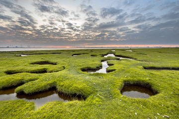 Wall Mural - Erosion holes in Tidal grassland of Dollard