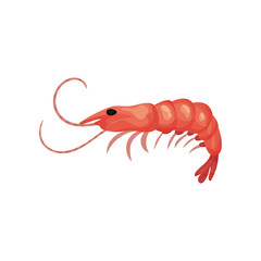 Flat vector icon of big fresh shrimp. Prawn with red shell. Seafood theme. Element for product packaging or promo poster