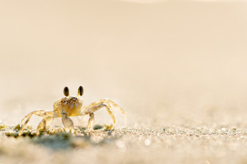 Crab on the beach, close-up