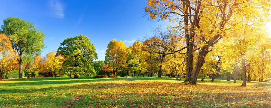 trees with multicolored leaves in the park