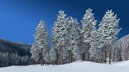 verschneite Tannen im Schwarzwald