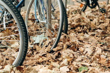 A close-up of a wheel of bicycles in a yellow or golden autumn foliage. Ecological transport and outdoor recreation. A popular means of transportation in Europe.