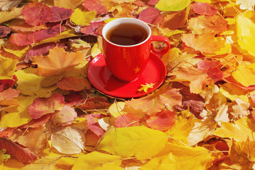 cup of tea on background autumn leaves