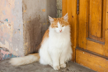 Beautiful red stray cat near the door