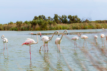 Beautiful Flamingo Birds 1
