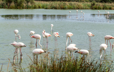 Beautiful Flamingo Birds 2